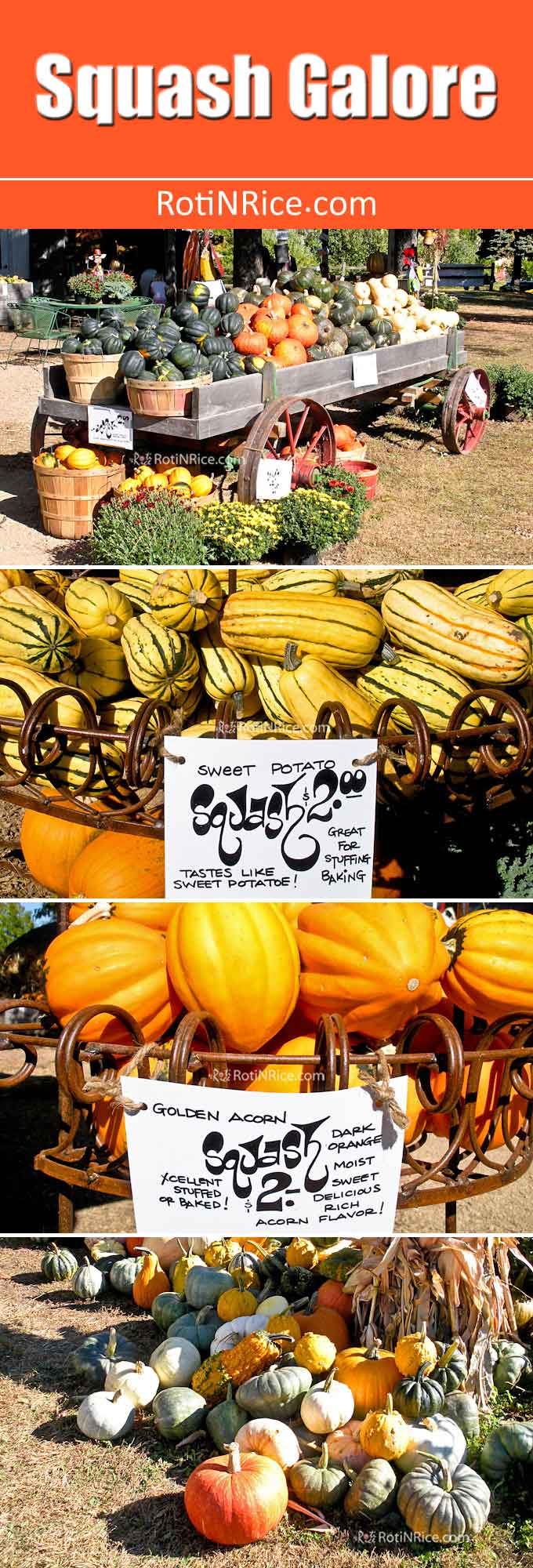 Squash Galore - a gorgeous fall weekend and a ride to the farmer's market to check out the varieties of squahes available at this time of the year. | RotiNRice.com