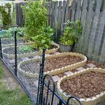 Our Vegetable Garden – Part 2