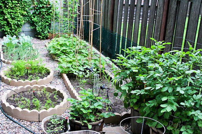 Tips and ideas for Planning Your Vegetable Garden - location, layout, feeding, pest control, and easy vegetables anyone can grow. | RotiNRice.com