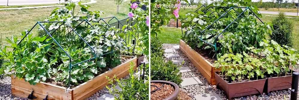 The raised bed is looking good from different angles and plants are growing well.