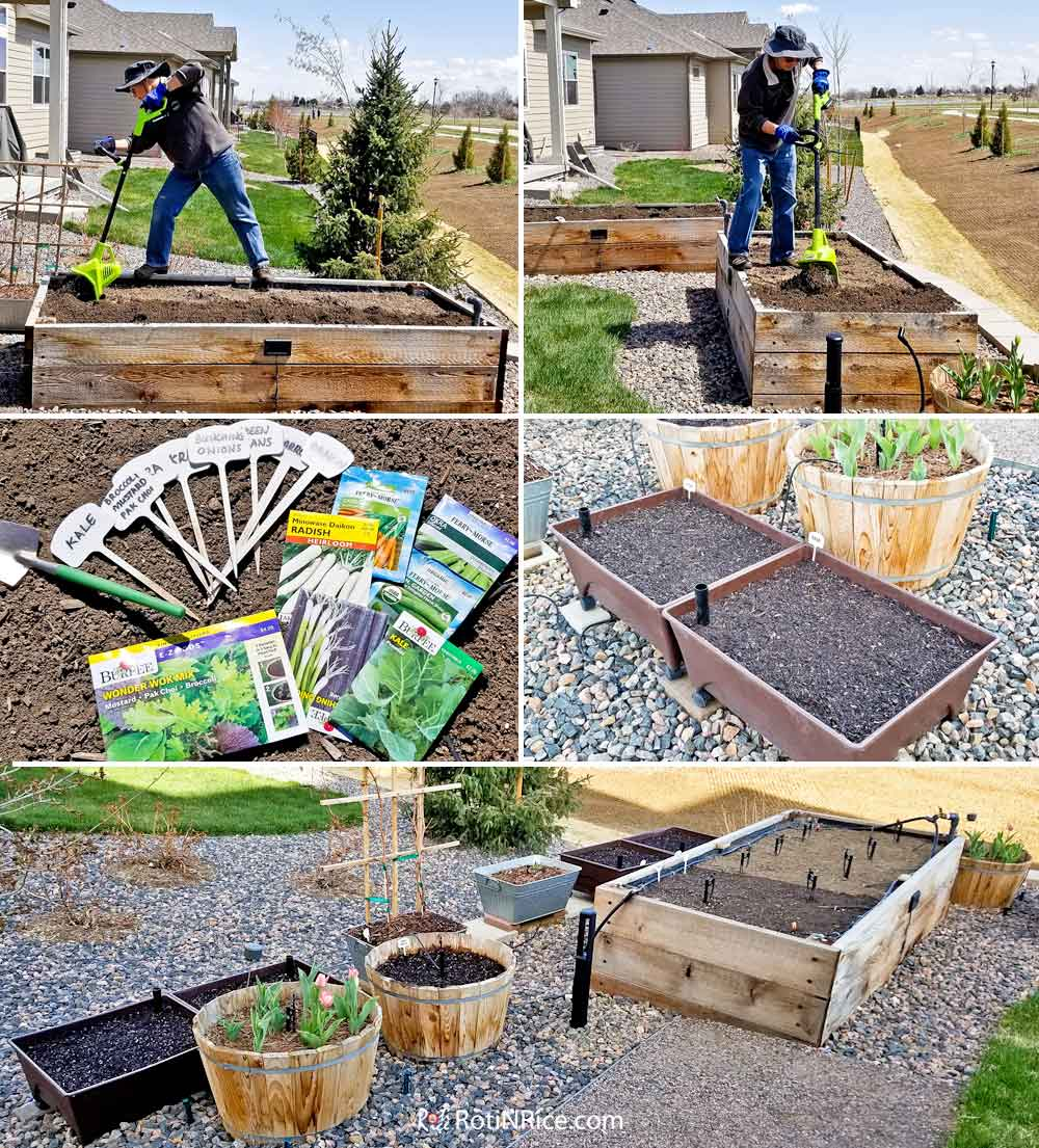 Preparing and planting in our two existing raised beds and self-watering raised-bed grow boxes.