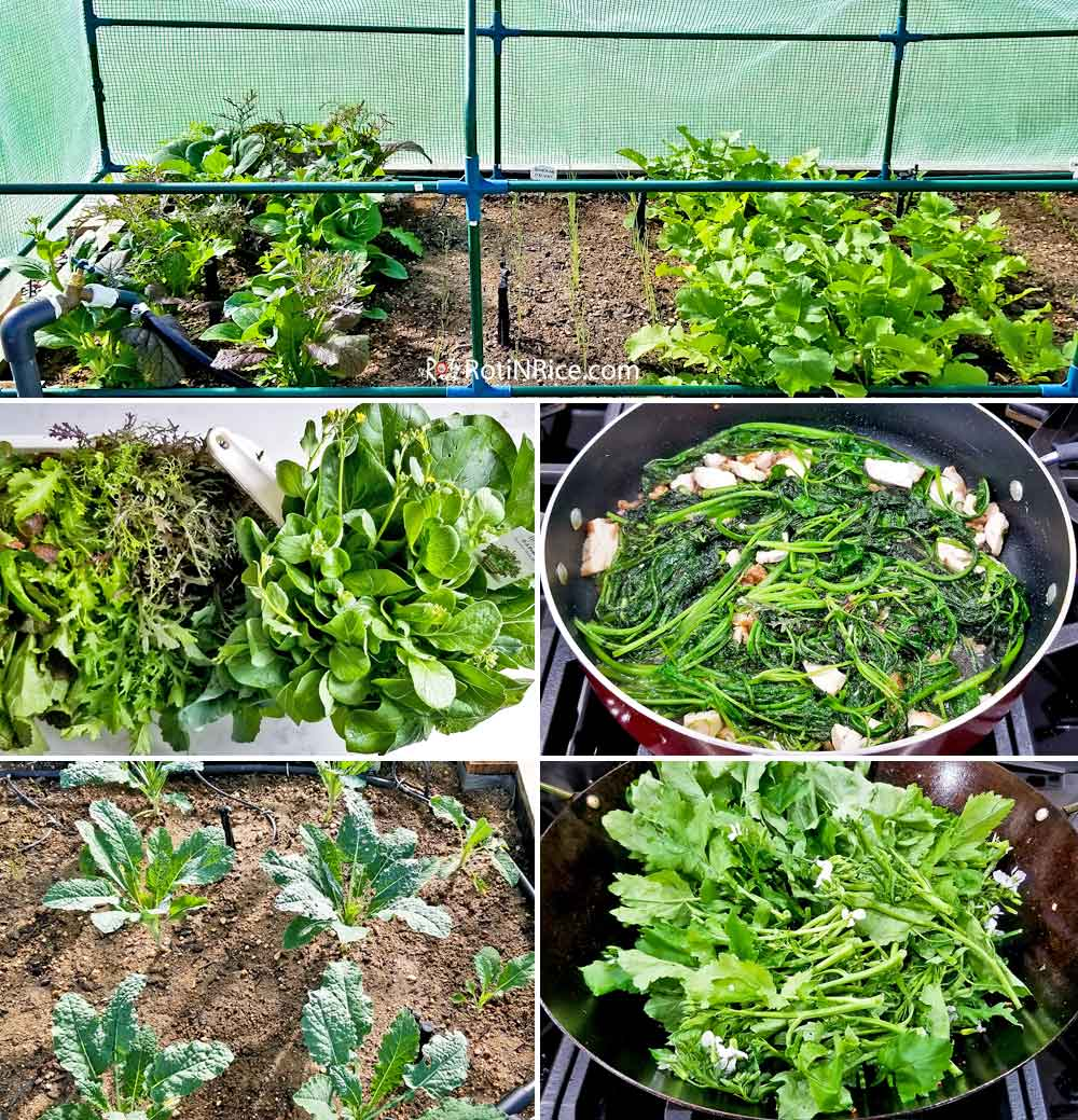 Bok choy, kale, and daikon leaves from existing raised beds.